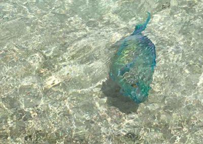 17_Seychelles_Fantozzi