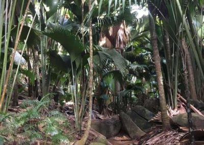 19_Seychelles_Fantozzi