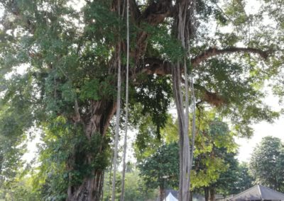 Giava Borobudur 6