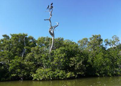 El balaam e Rio lagarto